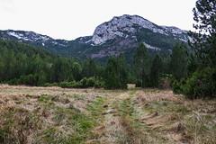 Čvrsnica mountain, Bosnia and Herzegovina (HimzoIsić) Tags: landscape mountain mountainside field forest hill peak road grass outdoor nature