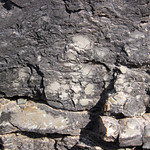 Intraclastic limestone (Mill Knob Member, Slade Formation, Upper Mississippian; Clack Mountain Road Outcrop, south of Morehead, Kentucky, USA) 3 thumbnail