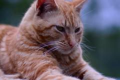Kitty cat... (jrmcmellen) Tags: