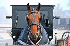 Amish Horse and Buggy Parking (forestforthetress) Tags: unlimitedphotos horse amish amishhorseandbuggy outdoor color omot nikon rural enjoyillinois travelillinois centralillinois arthur
