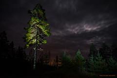 Forest lights (MIKAEL82KARLSSON) Tags: skog woods träd trees natur nature night natt nightshot nattfoto naturbild nattbild sky himmel sunset solnedgång sverige sweden dalarna kviddtjärn sony samyang 24mm mikael82karlsson