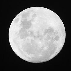 20181122_7945_7D2-840 Tonight's nearly full moon (326/365) (johnstewartnz) Tags: canon7dmarkii canoneos7dmkii nearlyfull squarecrop todaysmoon 600 600mm moon square 7dmarkii 7d2 7d canoneos7dmarkii onephotoaday onephotoaday2018 oneaday 365project project365 blackandwhite bw monochrome 100canon 600mmf4 ef600mmf4lis canon600mmf4 canonef600mmf4lisusmlensgroup