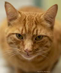 20181123_Cat 77mm_0015 crop (Sandy Beach Cat) Tags: 77mm cat annimal k1 pentax