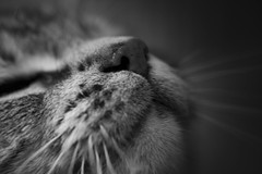 FluffSnout (TW Olympia) Tags: john turteltaub cat black white