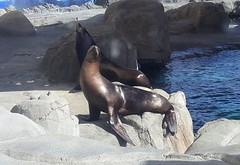 20180920_150554 (bryandkeith) Tags: unitedstates aquariumofthepacific longbeach
