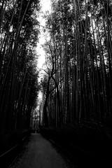 Arashiyama bamboo forest (Garry Shu) Tags: japon japan nihon kyoto bambou bamboo trees nature bw nb blackwhite noirblanc sony rx sonyrx rx100 sonyrx100 asia asie instagram deepdark dark sombre travel happyplanet asiafavorites