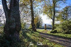 _DSC0065 (Julio Tomillo) Tags: nikond5100 naturaleza nature bosque forest árbol tree paisaje lancaspe otoño autumn asturias lightroom