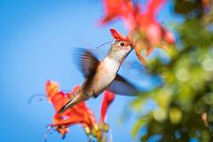 OC_Birds_12-24-18-2