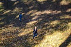 The Kids In Olivia Park (Joe Shlabotnik) Tags: november2018 foresthills foresthillsgardens queens fall autumn violet everett 2018 foliage afsdxvrzoomnikkor18105mmf3556ged