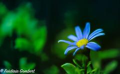 Autumn blues (frederic.gombert) Tags: flower flowers light green blue autumn fall sun sunlight macro sony color contrast bloom black