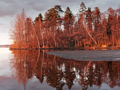 Forest scene at sunset (Digikuvaaja) Tags: europe finland background birch bright cloud color colorful environment foliage forest golden lake landscape light natural nature orange outdoor park peaceful picturesque red reflection river rural scene scenery scenic season serene shore sky sunlight sunny sunset sunshine surface tranquil tree trees water woodland yellow