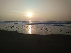 Sunset Flight (JB by the Sea) Tags: sangregorio halfmoonbay sanmateocounty california coastside november2018 pacificocean pacific ocean beach sunset smoke