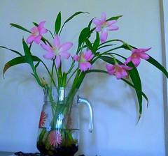 Flower Pot (H.S.Narang) Tags: flowers flower plant india delhi bloom blossom floweringplants plants flowerpot