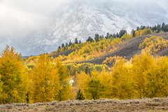 The Mountain Behind (Kirk Lougheed) Tags: artemisiatridentata grandteton grandtetonnationalpark oxbowbend populustremuloides teton tetons usa unitedstates wyoming aspen autumn fall landscape mountain mountainside outdoor plant sagebrush tree