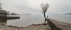 panoramica (pamo67) Tags: pamo67 panorama wiew lago lake grigio grey people foschia mist figura sponda shore albero tree pasqualemozzillo