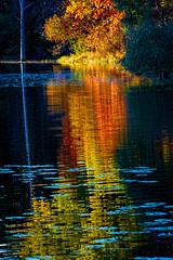 Shimmering Beauty (Wes Iversen) Tags: heronlake holly hollystaterecreationarea michigan nikkor18300mm autumn autumncolor lakes leaves lilypads reflections shimmering trees water