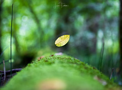 Autumn's coming (Luca_Fabbro_Photography) Tags: finart photography canon frozenmoment composition fall autumn still