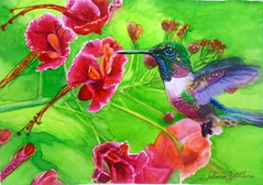 Hummingbird/beija-flor, by Selma B. - DSC04326 (Dona Minúcia) Tags: art painting watercolor study paper animal bird hummingbird flower feaf cute arte pintura aquarela beijaflor flor folha nature natureza belo beauty fofo gracinha