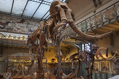 Muséum d'Histoire Naturelle - Paris (Philippe_28) Tags: muséum histoire naturelle galerie paléontologie france europe