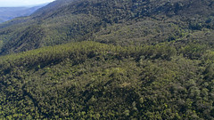 Sierra de Bahoruco, Zapoten (Dax M. Roman E.) Tags: sierradebahoruco zapoten daxromán republicadominicana