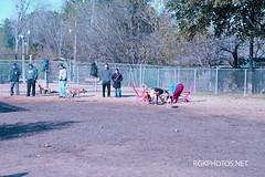 Officer_Lucy_Dogpark-1-1-2013 (2) (Ron Kikuchi) Tags: officerlucydogpark collies dogsdogparks germanshephards labradooddle labradors poodles ronkikuchi rgkphotosnet photgrapher copyrights forpermissiontousephotoscontactrgkphosnet forpermissiontousephotoscontactrgkphotosnet photosaresubjecttocopyrightlaws photosaresubjecttocopyrightsbyphotographer useofthesphotsowithoutpermissionisnotpermited