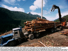 "Logging Truck 03 (hoffman) Tags: arboriculture bc britishcolumbia canada clearcut clearcutting countryside crane deforestation felling forestry haulage haulier hauling horizontal industry island labor load loading logging logs lorry lumber nature outdoors road timber track tractor trailer transport trees truck trucking trunk vancouver vancouverisland vehicle wood woodlands work yarder 181112patchingsetforimagerights davidhoffman wwwhoffmanphotoscom portalberni davidhoffmanphotolibrary socialissues reportage stockphotos""stock photostock photography"" stockphotographs""documentarywwwhoffmanphotoscom copyright"