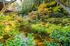 Autumn Scenery at Gansen-ji, Kizugawa-shi, Kyōto-fu-Japan. (KyotoDreamTrips) Tags: gansenjitemple japan kizugawashi kyōtofu autumn autumnphotography もみじ 岩船寺 木津川市 紅葉 kyōtoprefecture jp