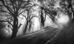 Veitureira (Noel F.) Tags: sony a7r a7rii ii voigtlander 50 12 nokton vm teo lampai veitureira galiza galicia neboa fog mist