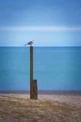 Seagull on a Pole (johaennesy) Tags: ostsee balticsea seagulls bird vertical opensourcesoftware gimp rawtherapee timmendorferstrand lübeckerbucht schleswigholstein norddeutschland