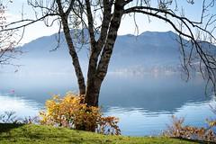 Herbst am See (Chris Buhr) Tags: summilux m10 leica golden gold autumn herbst landscape landschaft natur bavaria bayern tegernsee