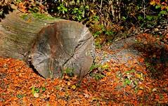 Nature d'automne (Diegojack) Tags: vaud suisse lemont d500 nikon nikonpassion automne couleurs nature paysages