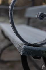 Details (jannaheli) Tags: suomi finland helsinki laajasalo talvi winter marraskuu november nikond7200 nature luonto luontovalokuvaus naturephotography naturetherapy luontoterapia outdoor outside ulkona rauha peace frost halla huurre