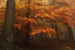 ThereWithYou (Lothbrok'sYen) Tags: lothbroksyen fog forest wald woods autumn november germany