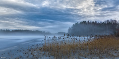 (Øyvind Bjerkholt (Thanks for 67 million+ views)) Tags: longumvannet lake frozen winter cold foggy landscape nature straws beautiful arendal norway canon