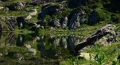 Reflets persos ... Reflexion on yourself... (CHAM BT) Tags: mouton vert lac reflet eau montagne ballade promenade troupeau rocher pierre silence green lake water mountain walk rock stone sheep