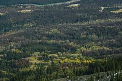 Jasper_Tram04 (janeperezphoto) Tags: jasper jaspernationalpark mountains canada canadianrockies wanderlust nature rivers snow water animals wildlife explore roadphotography roadtrip roads lakes