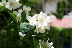 Te Puhi (Heart felt) Tags: spring newzealand wairarapa gardens richmondgarden carterton tepuhigarden featherston oldtablelands martinborough pukahagardentour sadie hugo nature