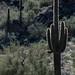 Desert Backlighting