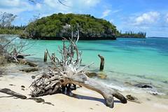 Sacred Island Kanumera Beach (Seventh Heaven Photography *) Tags: sacred island kanumera beach new caledonia isle pines sea ocean pacific driftwood wood sky blue nikon d3200 sand