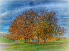 Together (Andy Stones) Tags: trees centralpark autumn autumnal recreation park grass leaves sky skywatching clouds pathway path nature naturephotography colour colourful scunthorpe lincolnshire northlincs northlincolnshire nlincs outdoors outside image imageof imagecapture photography photoof