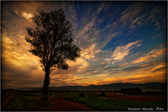 N. E. G. U. (SHADOWY HEAVEN Aya) Tags: 1607257ha1856 北海道 hokkaido 日本 ファインダー越しの私の世界 写真好きな人と繋がりたい 写真撮ってる人と繋がりたい 写真の奏でる私の世界 coregraphy japan tokyocameraclub igers igersjp phosjapan picsjp 空 雲 outdoor landscape paysage cloud clouds sky sunset dusk tree 夕日 夕陽 夕焼け