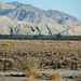 Distressed vineyard in Coachella Valley, California