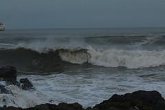 IMG_0595 (monika.carrie) Tags: monikacarrie wildlife scotland aberdeen waves