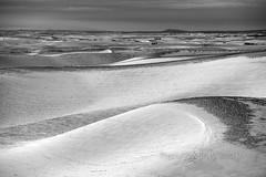 Palouse Winter Wave (Ryan McGinty) Tags: nikon80200mmafs sonya7iii snow winter scenic landscape idaho washington blackandwhite palouse ryanmcginty rollinghills
