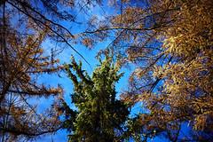 orange, green, orange (Jos Mecklenfeld) Tags: autumn herbst herfst nature natur natuur forest wald bos westerwolde niederlande nederland jipsingboertange groningen netherlands nl sonya6000 sonyilce6000 sel30m35