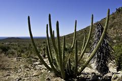 El Oho De Agua (rhadley8161) Tags: cactus hiking water mexico sonora sea cortez travel landscape plants