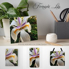Bring these Fresh Fortnight Lilies Home With Art Boards, Totes, Journals, iPhone Cases and Much more! Available exclusively from DouglasEWelch.com/shop/175 See my entire catalog DouglasEWelch.com/shop/ Art Board Features * Professionally printed on waterc (dewelch) Tags: