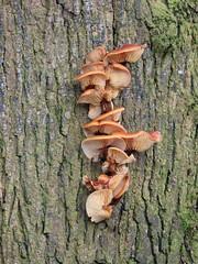 Anglų lietuvių žodynas. Žodis staff tree reiškia darbuotojai medis lietuviškai.