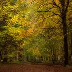 In the Beech wood thumbnail