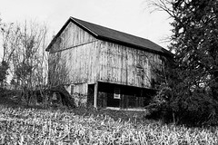 Barn (JCTopping) Tags: agriculture daytime crops barn tree 40mm architecture farm canon blackandwhite 6d autumn catawissa pennsylvania unitedstates us